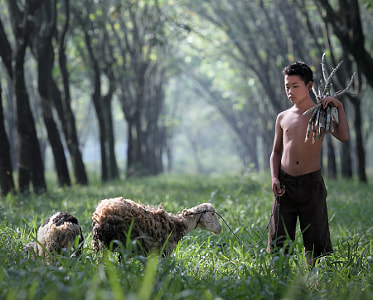the shepherd by dewan irawan