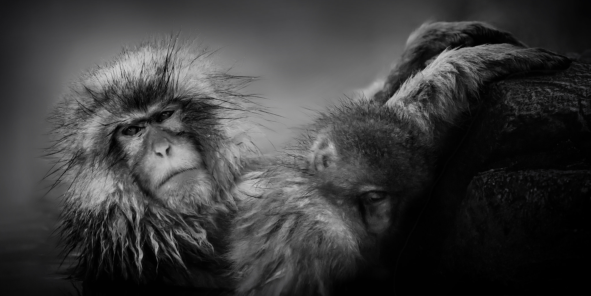 Photograph Snow Monkey by Oat Vaiyaboon on 500px
