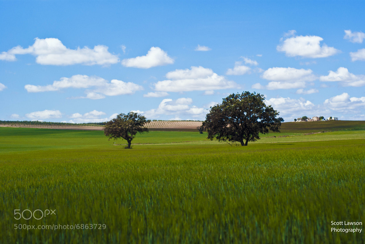 Photograph green field by Scott Aaron Lawson on 500px