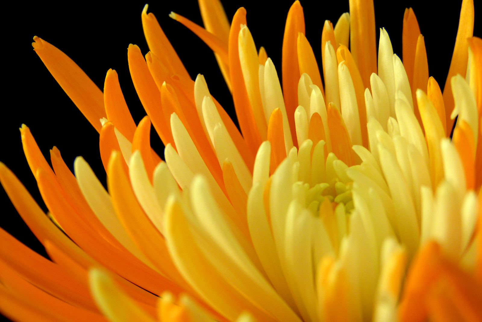 Photograph Black and Orange by Wes Owen on 500px