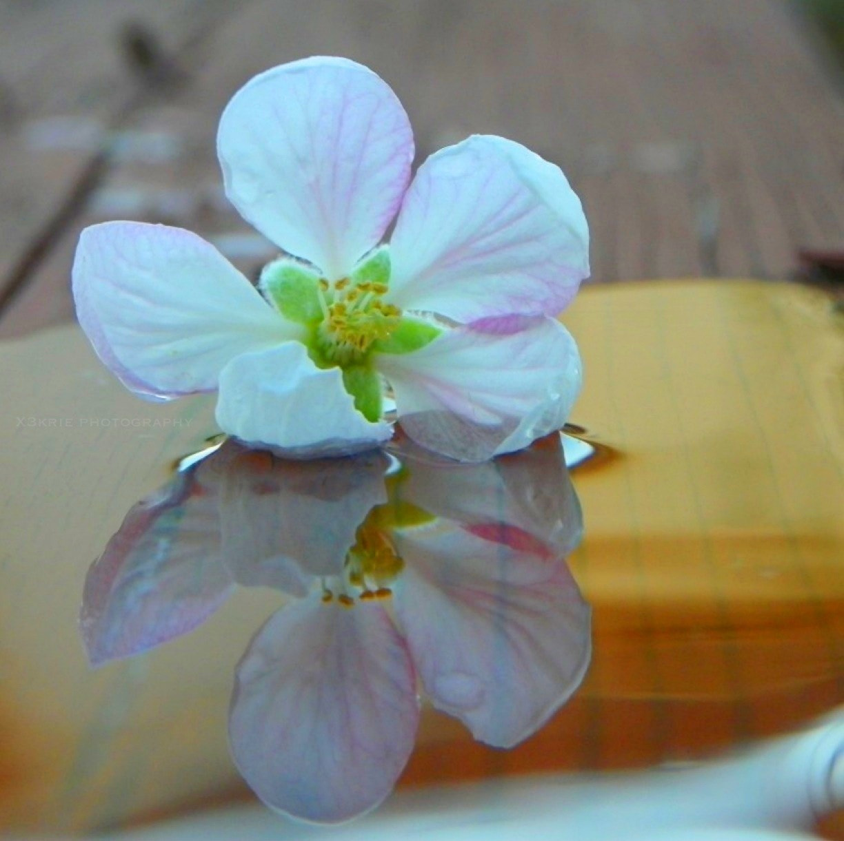 Photograph ❥simple beauty by Charmed Lens Photography on 500px