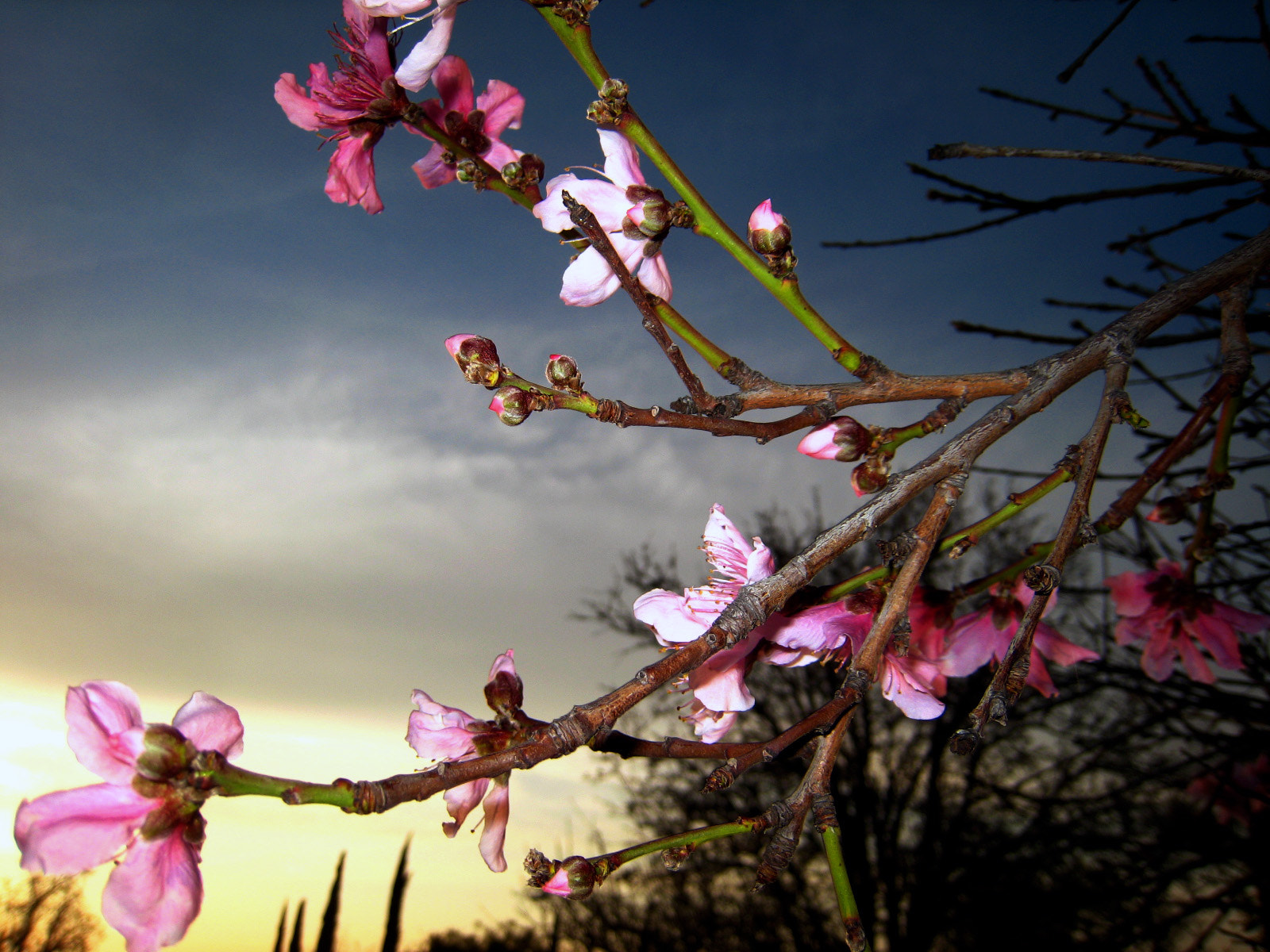 Photograph Peach Blossom by Ray Barreta on 500px