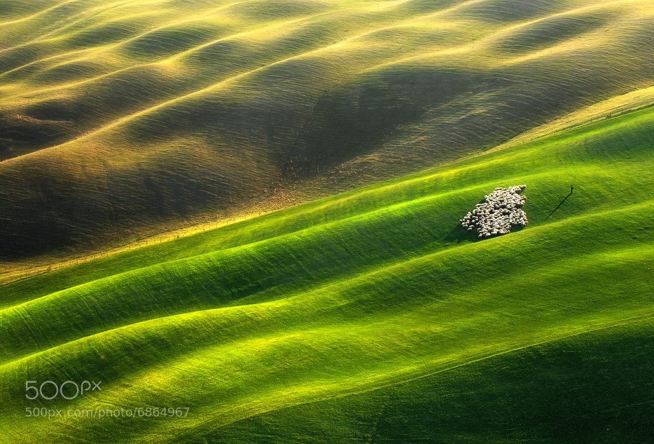 Photograph Flock of sheep... by Krzysztof Browko on 500px
