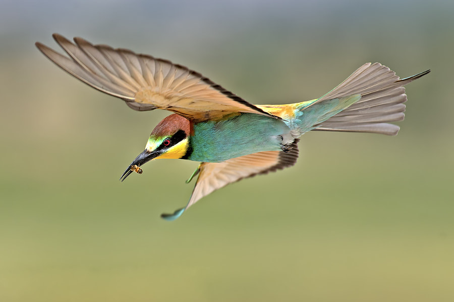Bee Eaters. by David Daniel on 500px.com
