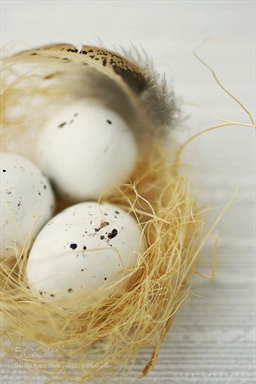 Photograph minor nest by Dalay Lapa on 500px