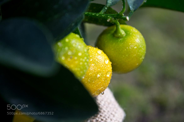 Photograph Oranges by Matthias E on 500px