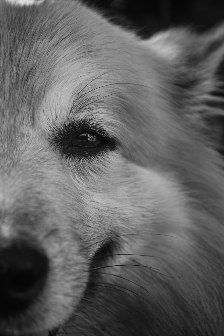 Photograph Charlie the dog by Matthias E on 500px