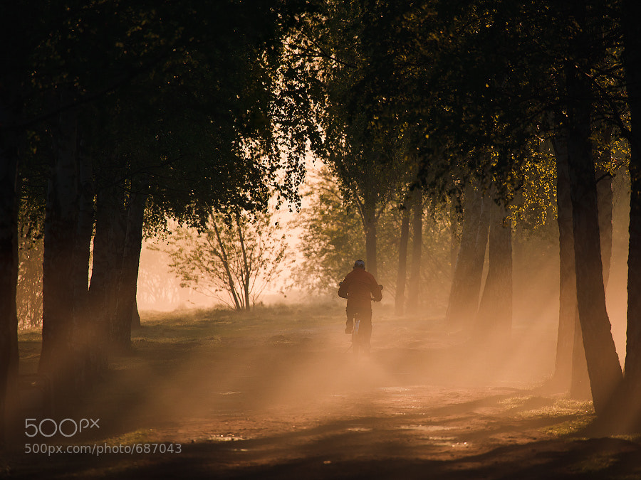 Photograph Morning in the park - 2 by Alexei Mikhailov on 500px