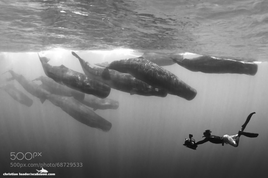 Photograph Swimming With Giants (B&W) by Christian Loader on 500px