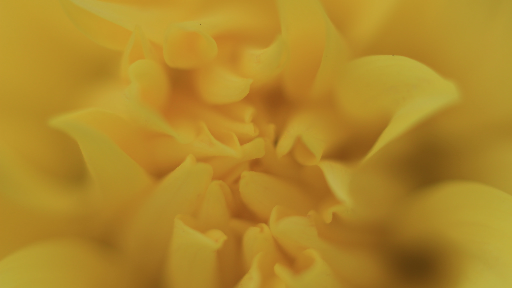 Photograph Yellow by Studio Photo Design on 500px