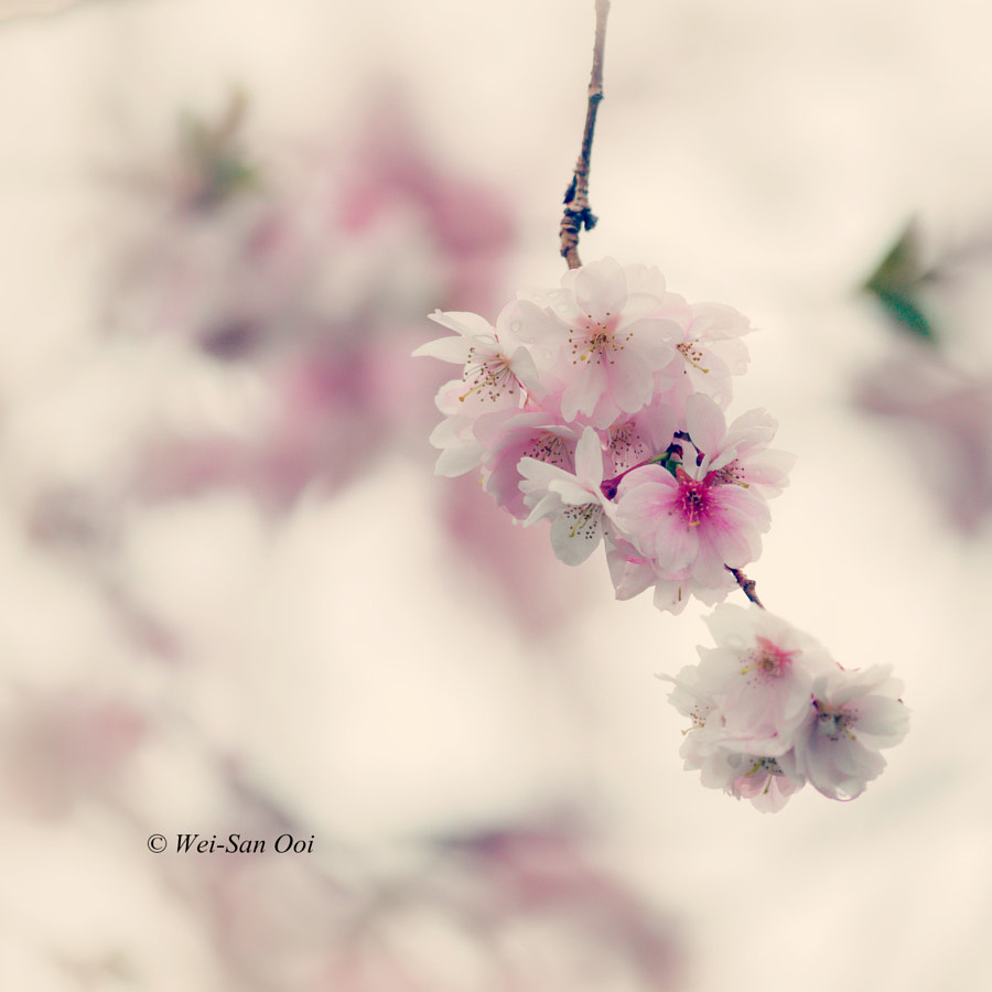 Spring 25 by Wei-San Ooi on 500px.com