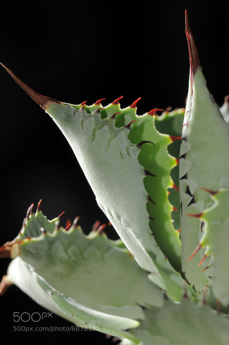 Photograph Thorns by Erich M. Staudacher on 500px
