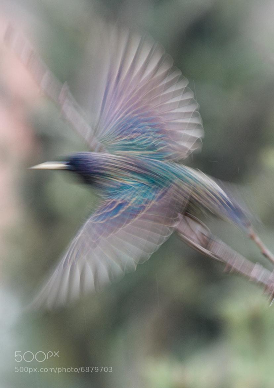 Photograph Flight by Jesper Rasmussen on 500px