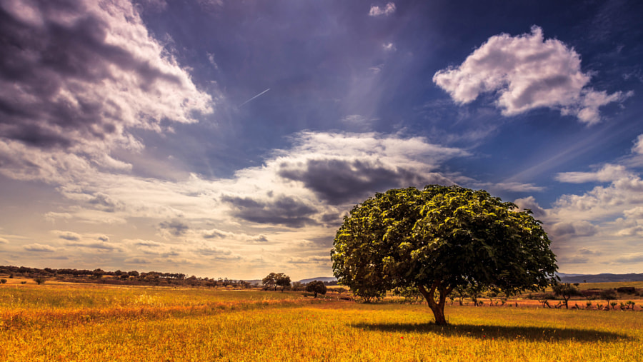 Photograph Tree of Life by Pedro Quintela on 500px