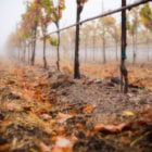 Постер, плакат: Foggy Carneros Morning