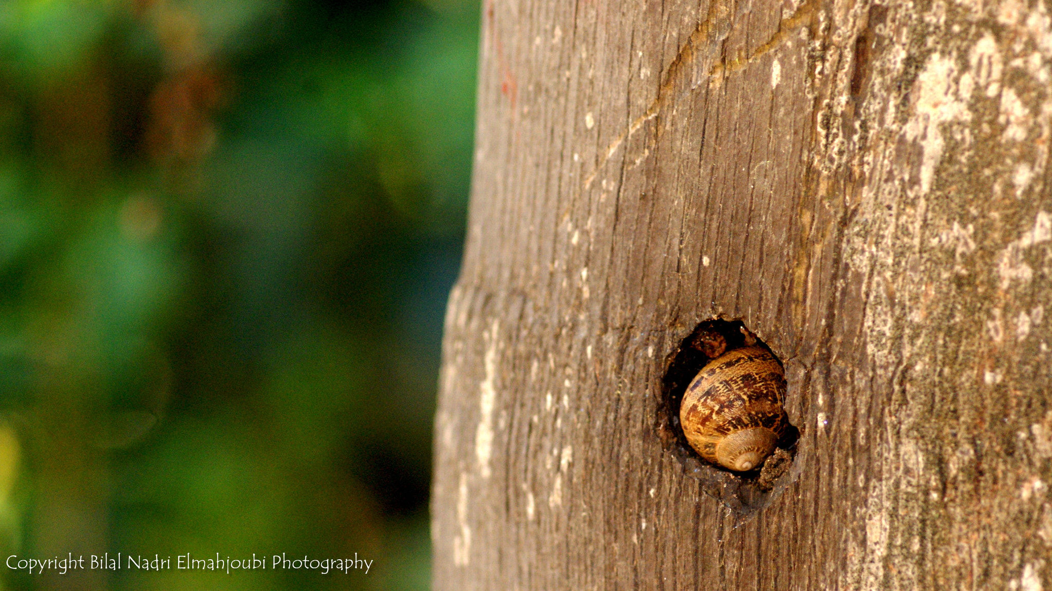 Photograph Escargot  by Bilal Nadri on 500px