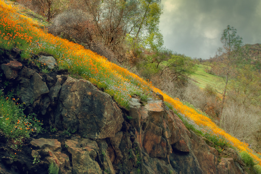 Photograph Spring in the Canyon by Vincent James on 500px