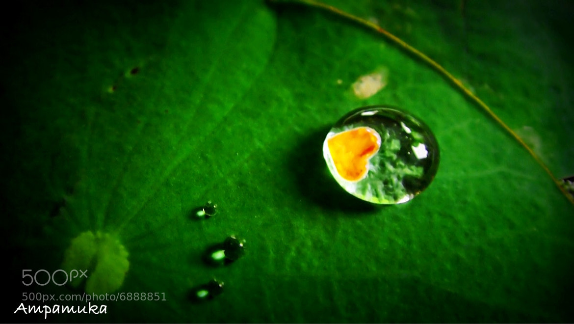 Photograph Droplet of Love by Suradej Chuephanich on 500px