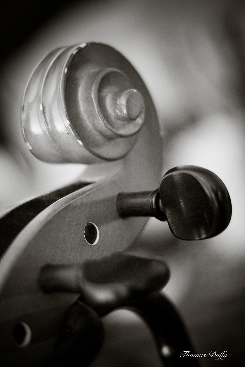 Photograph Tuning Pegs and Cello Scroll by Thomas Duffy on 500px