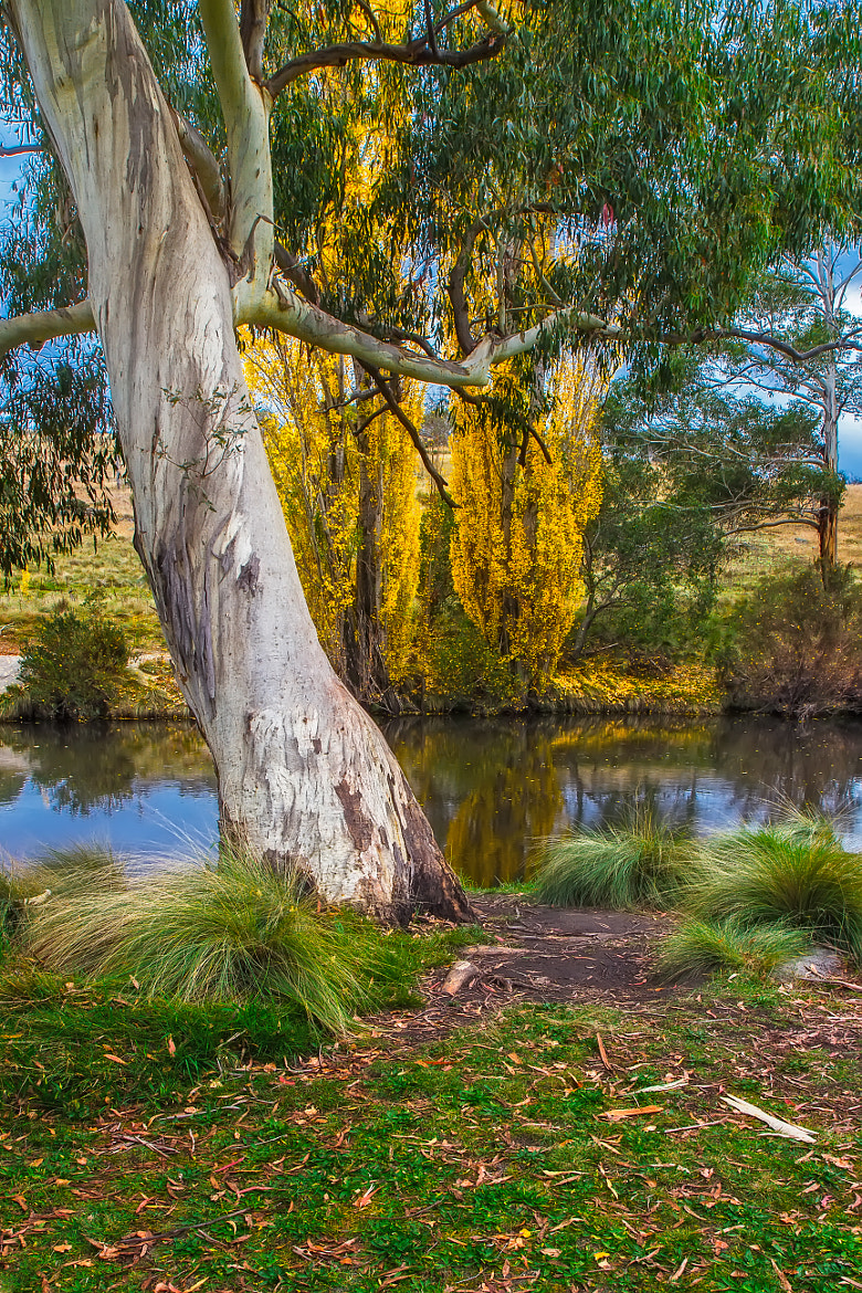 Photograph The River Gum by Mark Lucey on 500px