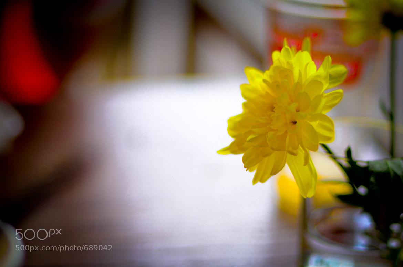 Photograph summer by alex ambrozyak on 500px