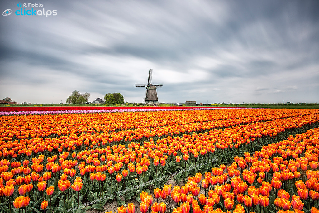 Photograph Holland Canvas by Roberto Sysa Moiola on 500px