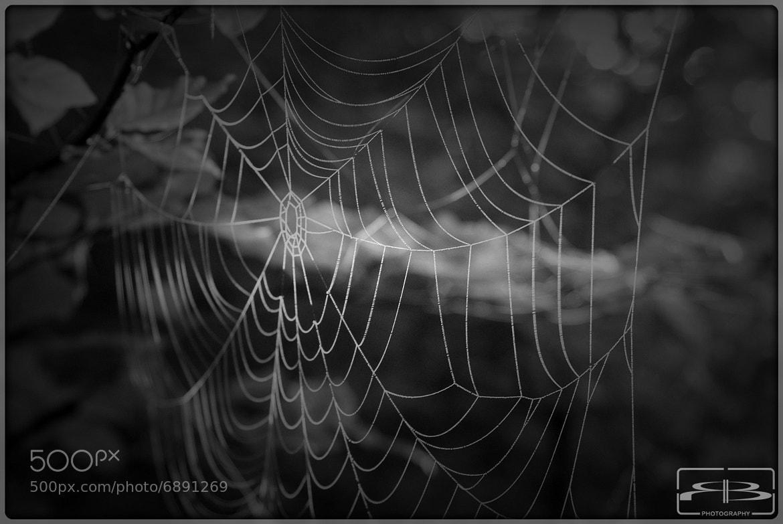 Photograph Spiderweb by Rene BERNHARD on 500px