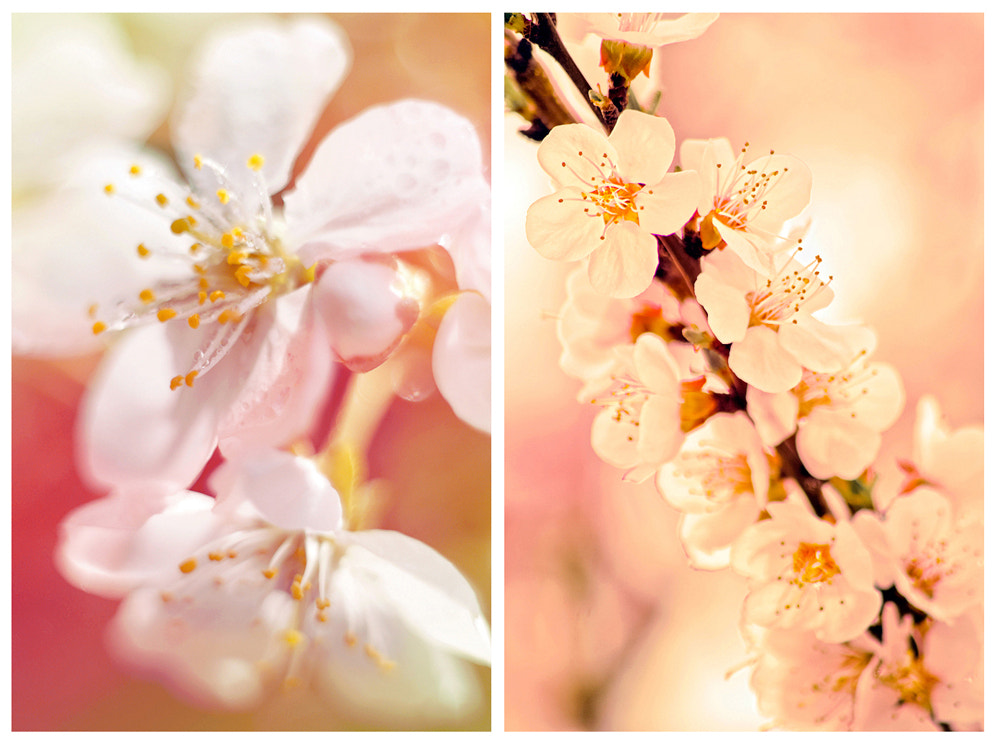 Photograph blossoming by Nataly Golubeva on 500px