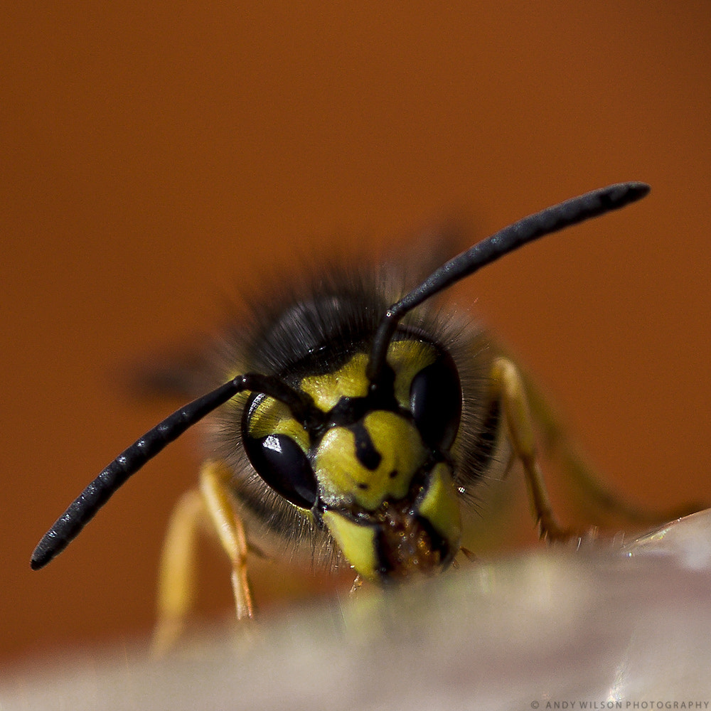 Photograph WASP by Andy Wilson on 500px