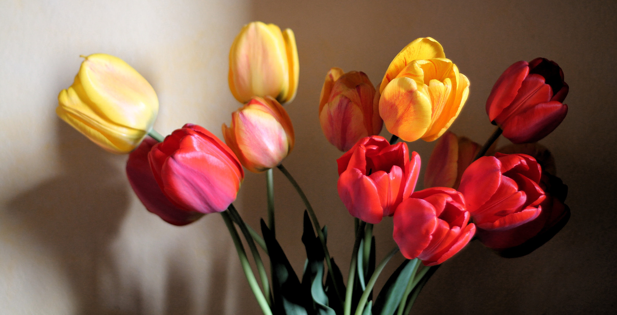 Photograph Tulips by Emi Pi on 500px