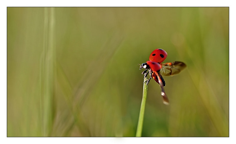 Photograph taking off by Yohanna Del'heaumeau on 500px