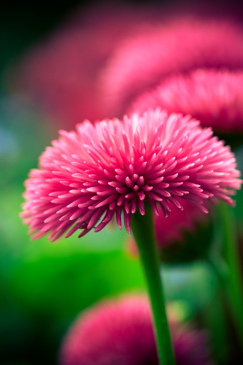 Photograph Pink by Carole Merten on 500px
