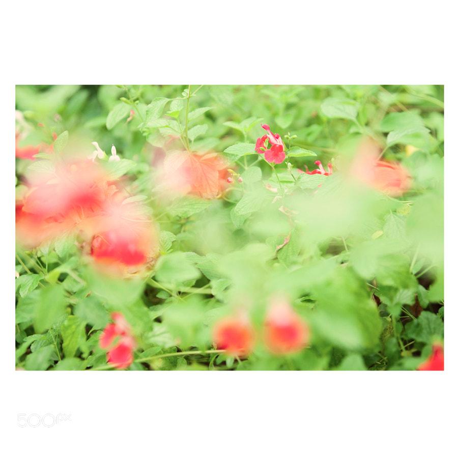 Photograph - by miyoun kim on 500px