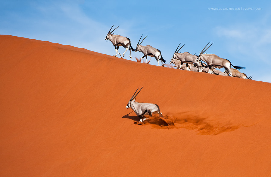 Photograph Survivors by Marsel van Oosten on 500px