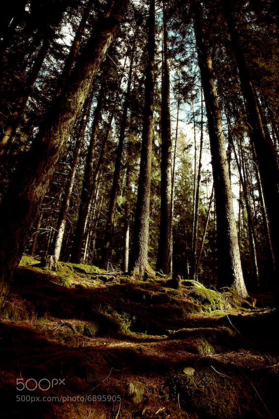 Photograph Wald by Felix Hedel on 500px