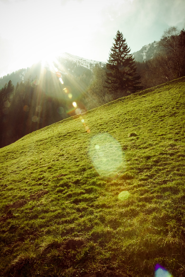 Photograph Sonne by Felix Hedel on 500px