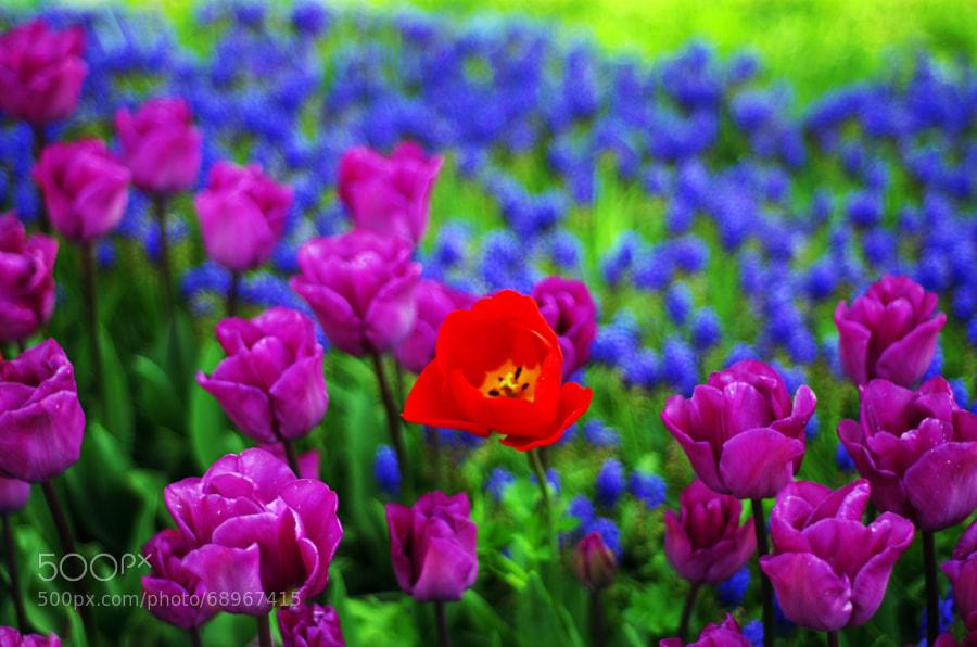 Photograph Flowers by Barış Kayhan on 500px