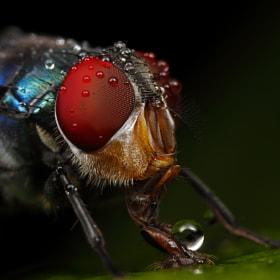 Droplet by John Cogan (casseris) on 500px.com