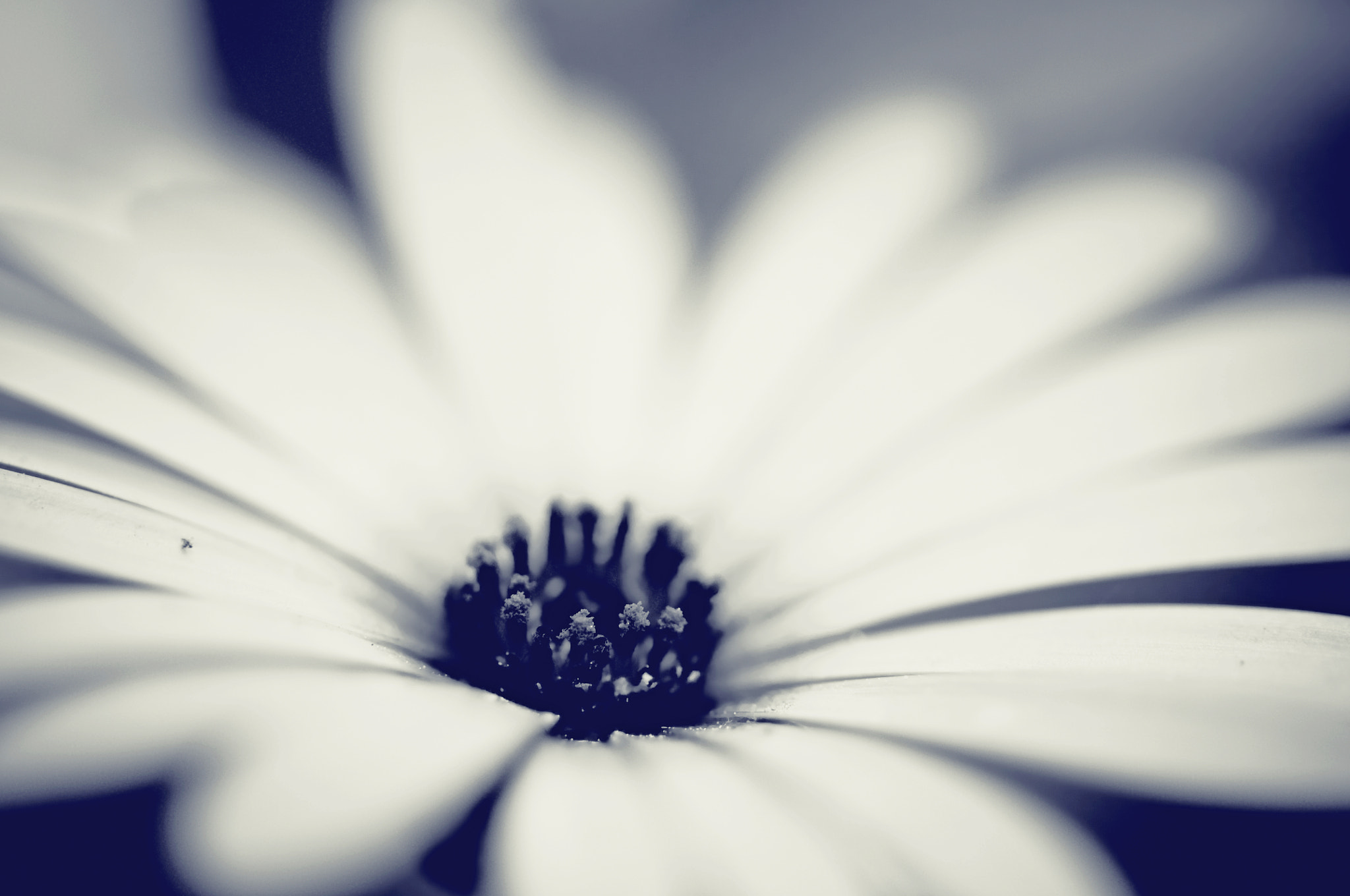 Photograph 20090425_162932A_Floral by Donavon Yelton on 500px