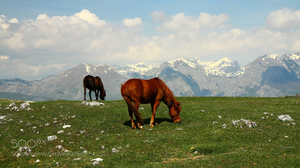 Photograph The grazing by Uhler on 500px