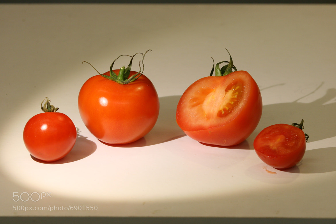 Photograph Rotting Tomato HD - The Time Lapse Guys by The Time Lapse Guys on 500px