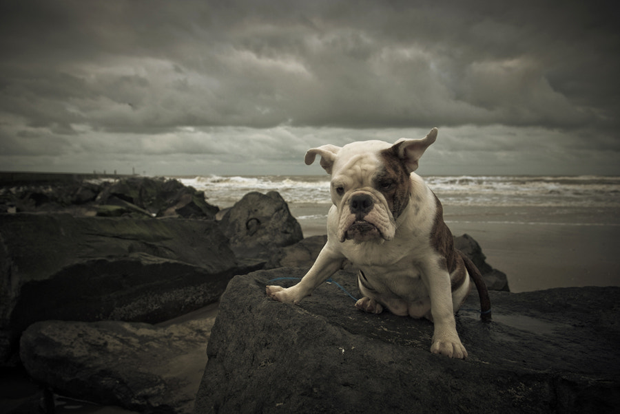Photograph I Love My Dog by Daan Overkleeft on 500px