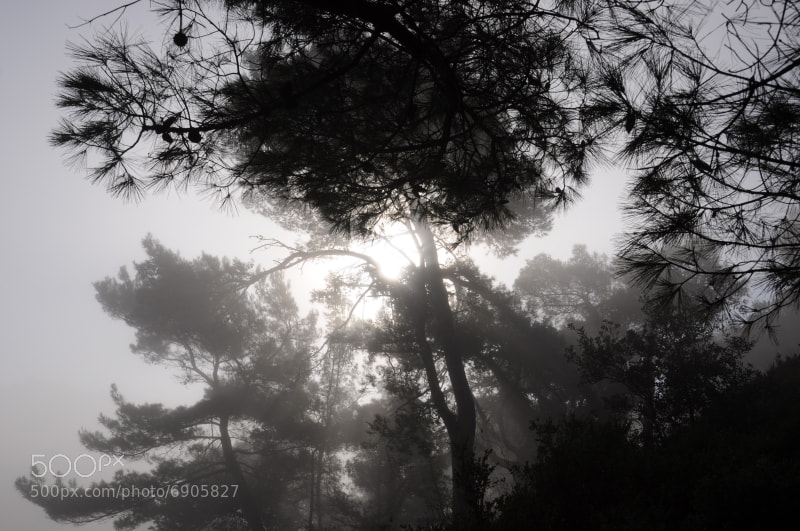 Photograph Contro luce by Alessandro Vitale on 500px