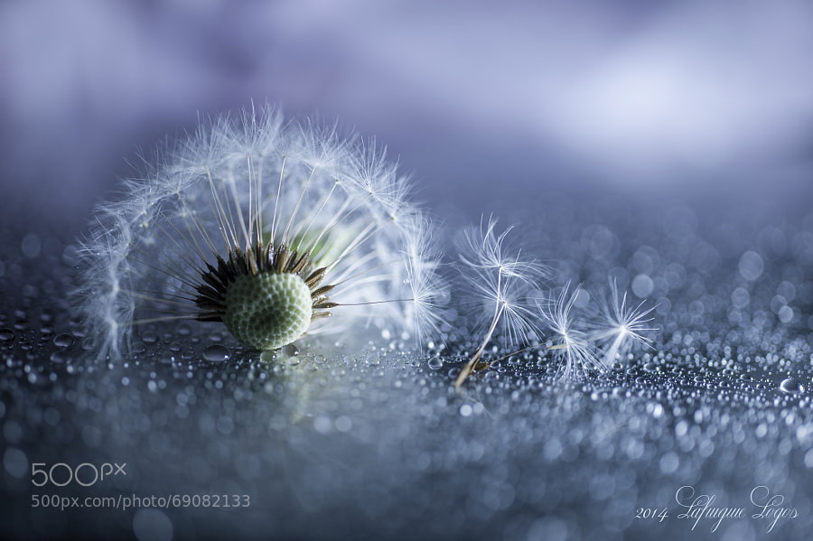 Photograph into Halves by Lafugue Logos   on 500px