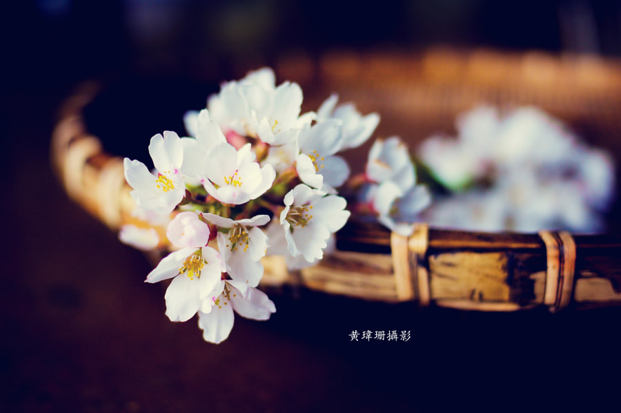 Photograph Blossoms Art 02 by Wei-San Ooi  on 500px
