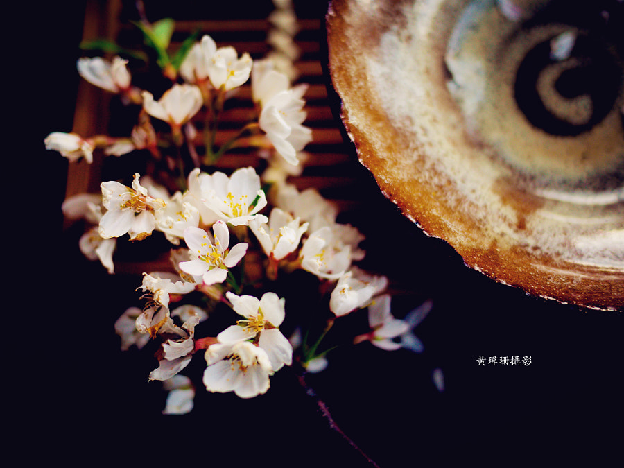 Photograph Blossoms Art 05 by Wei-San Ooi  on 500px