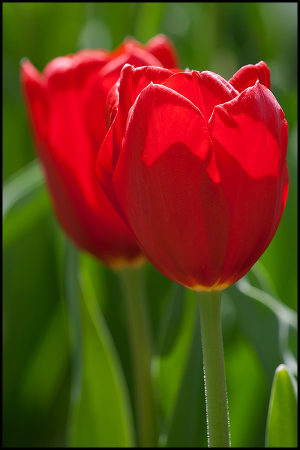 Photograph Two In Red by Elijah Goodwin on 500px