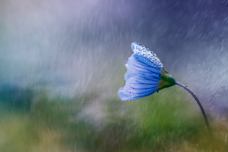 Photograph Tender Rain by Wolfgang Korazija on 500px
