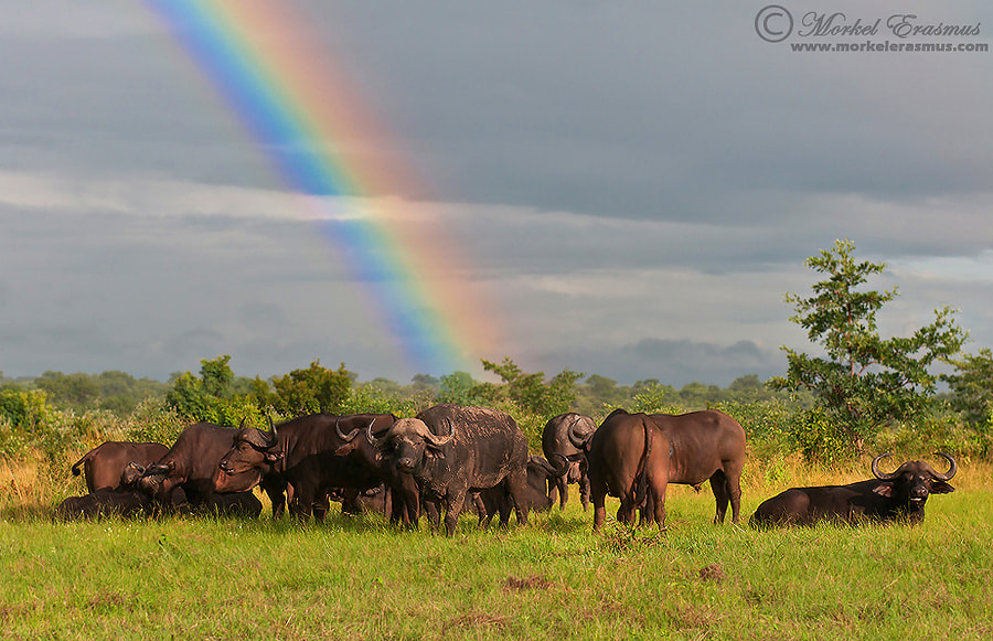 Photograph At the end of the rainbow... by Morkel Erasmus on 500px