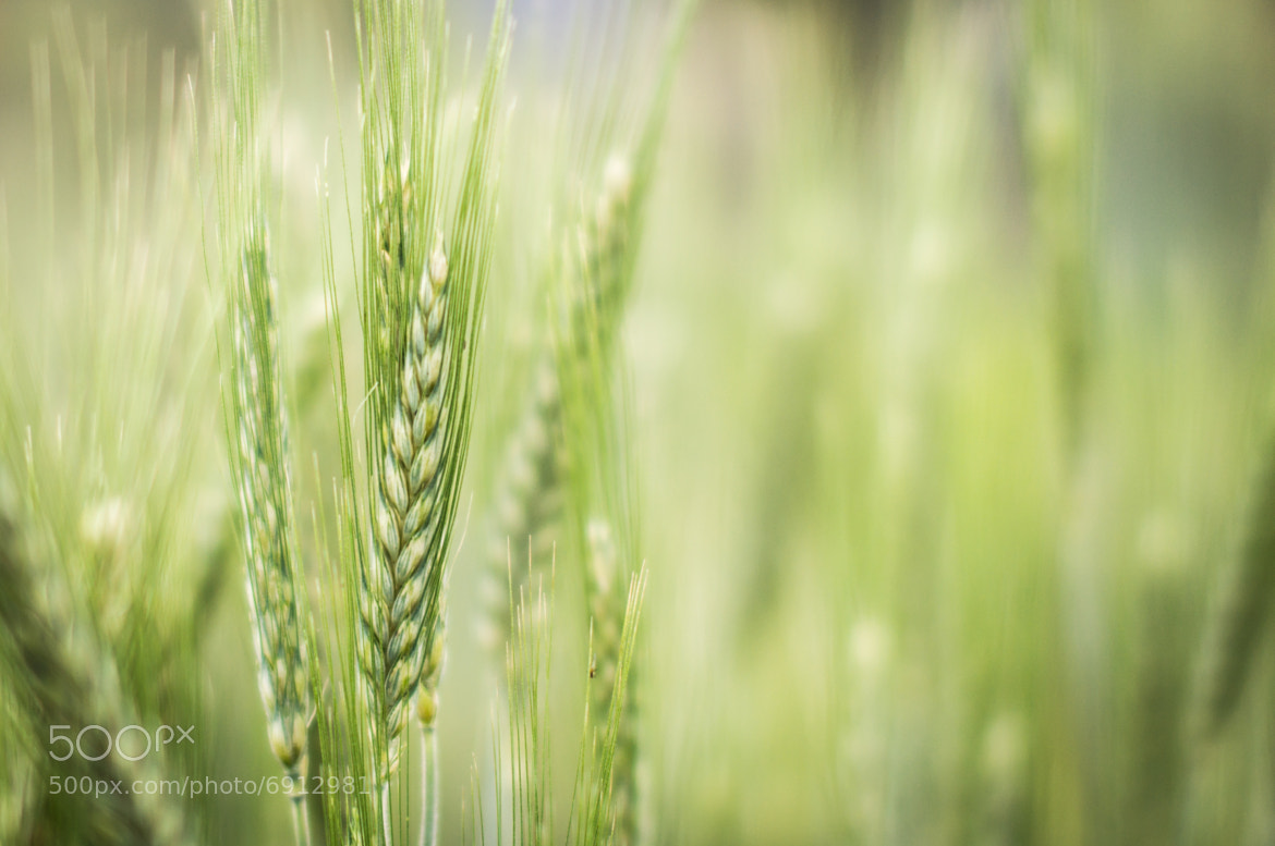 Photograph Full of green by Vlad Lapadatescu on 500px